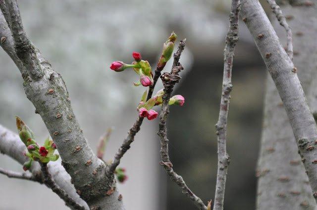 Blossom of spring