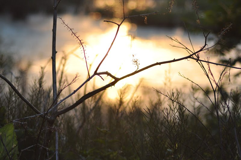 branch in front of pond with sun reflecting on it by Katie M. Reid photography