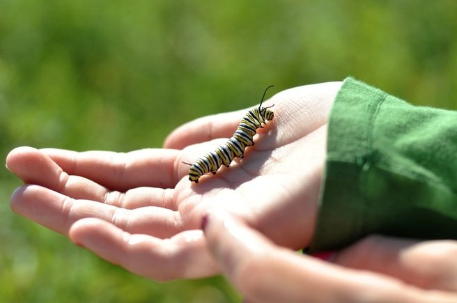girl holding caterpillar