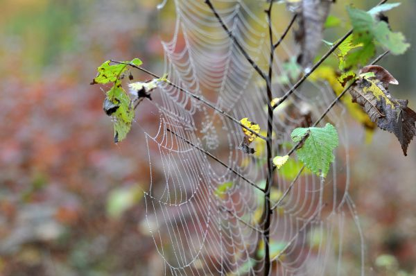 Spiders web by Katie M Reid